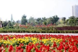 全国多地推出扶持花卉行业政策
