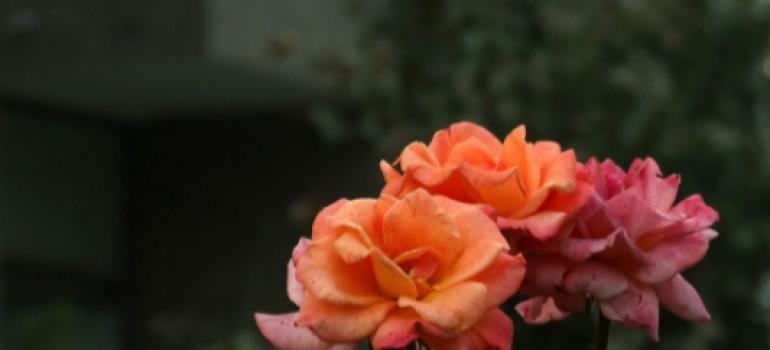 有那些简单打理盆栽花苗?