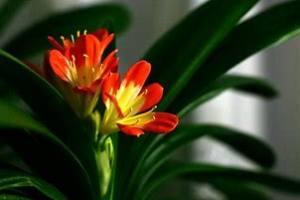 西安花卉租摆之有哪些花卉植物适合浇灌阿司匹林