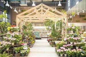 绿植店分享养花秘笈