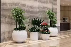 绿植花卉出租需要做什么准备工作