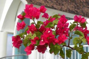 花卉租摆分享4种分类花卉的区别