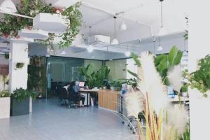 办公室绿植花卉租摆的植物选择