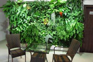 写字楼办公室内绿植租摆有哪些作用