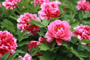 第22届中国国际花卉园艺展览会——园艺触网拓销售