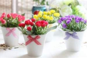 绿植租摆室内盆栽花卉养护技巧