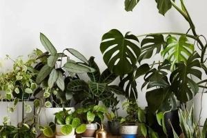 依据花卉绿植所合适的光照环境选择植物