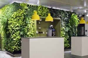 绿植租摆给租赁公司带来的益处