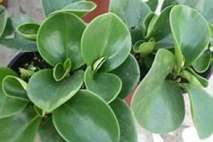豆瓣绿百科