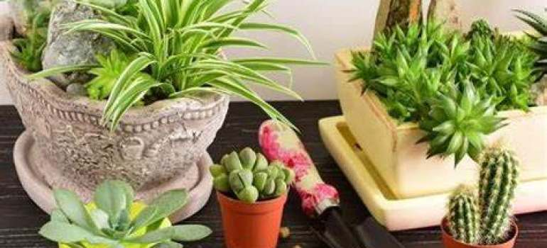 花卉租摆公司分享冬季养花注意事项