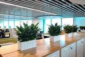 为什么要选择办公室绿植租摆