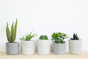 花卉绿植租赁如何预防花卉绿植烂根