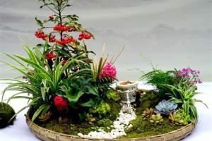 植物租赁公司分享组合盆栽租摆的注意事项和养护方法