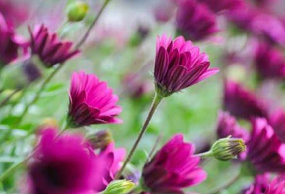 鲜花行业的法规标准