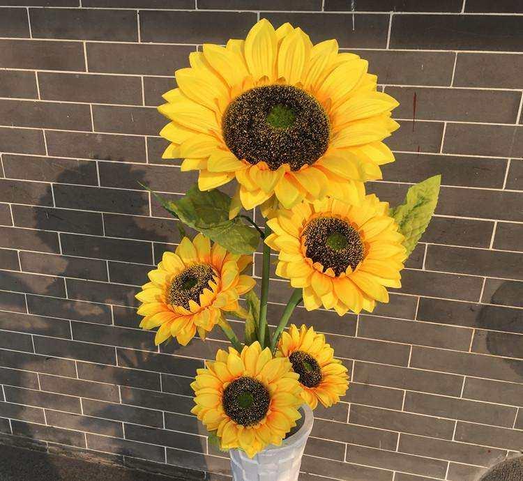太阳花.jpg