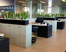 办公室盆栽租赁技巧