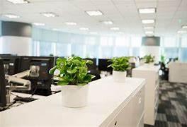 绿植租赁的优点有哪些