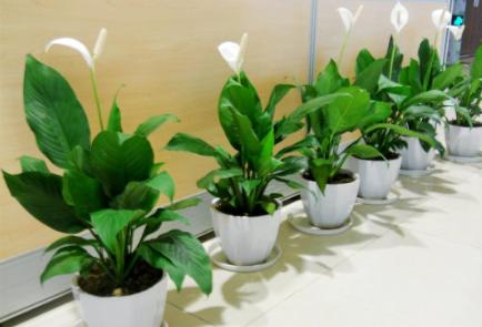 常见盆栽绿植的养护技巧